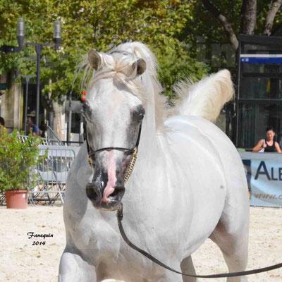Concours national de Nîmes 2014 - ESTA ESPLANAN - Notre Sélection - Portraits - 06