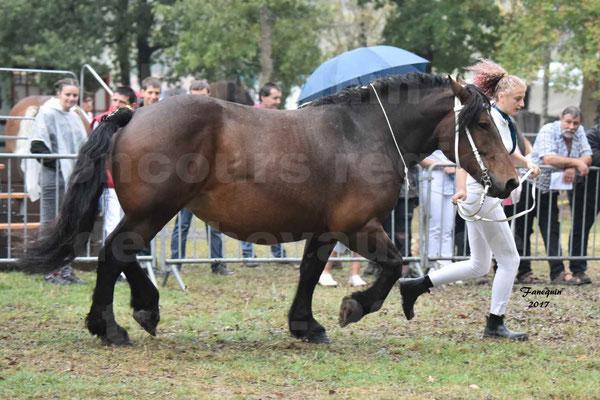 Concours Régional de chevaux de traits en 2017 - Jument & Poulain Trait COMTOIS - CANDY DE GRILLOLES - 01