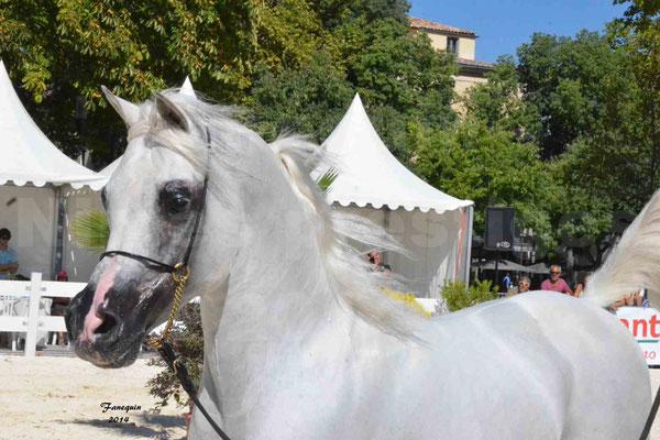 Concours national de Nîmes 2014 - ESTA ESPLANAN - Notre Sélection - Portraits - 11
