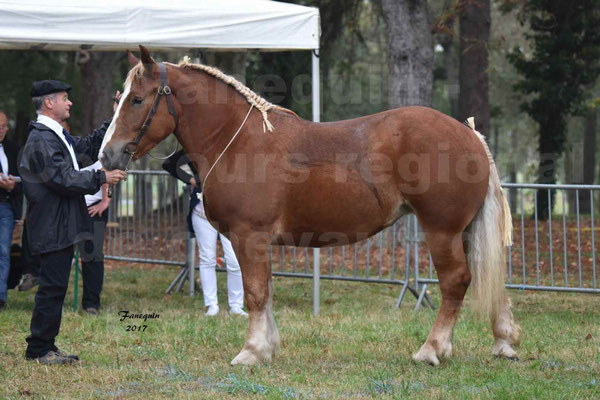 Concours Régional de chevaux de traits en 2017 - Trait BRETON - FLO DE LA MARGUE - 01