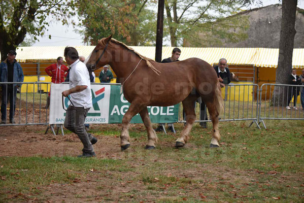 Concours Régional de chevaux de traits en 2017 - Trait BRETON - FLICKA 26 - 14