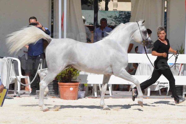 Concours national de Nîmes 2014 - ESTA ESPLANAN - Notre Sélection - 01