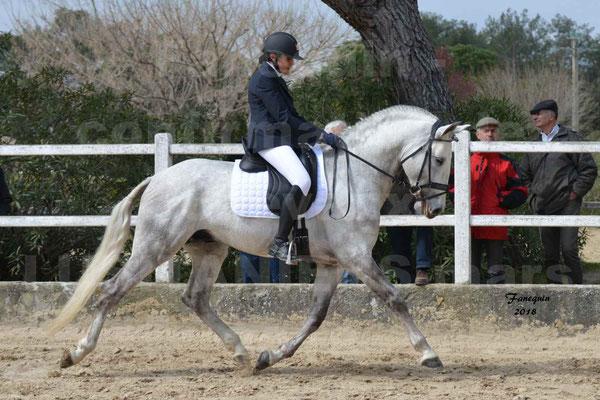 confirmation de chevaux LUSITANIENS Mars 2018 - H-CAVIAR - de l'élevage Jean MARTINEZ