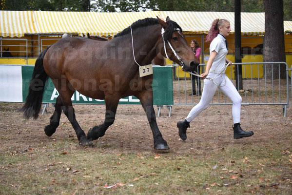 Concours Régional de chevaux de traits en 2017 - Jument & Poulain Trait COMTOIS - CANDY DE GRILLOLES - 22