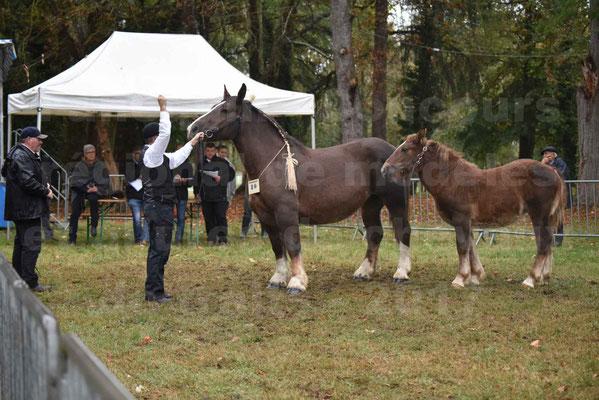 Concours Régional de chevaux de traits en 2017 - Jument & Poulain Trait BRETON - DIANE 18 - 04