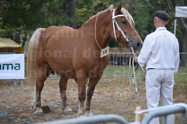 Concours Régional de chevaux de traits en 2017 - Jument & Poulain COMTOIS - ALLIANCE 3 - 06