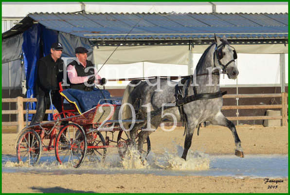 Cheval Passion 2015 - Démonstration d'attelage en simple d'un LIPIZZAN