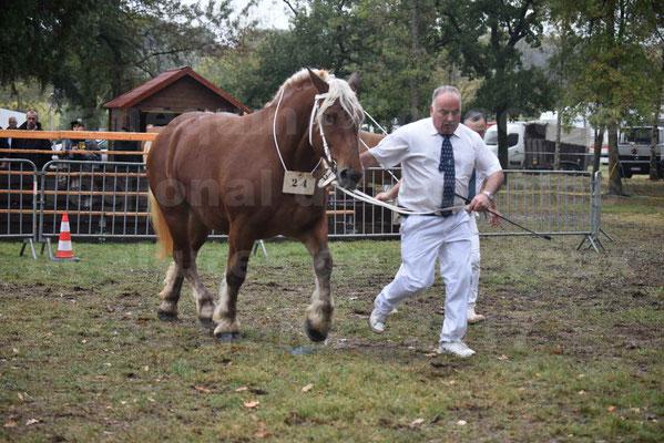 Concours Régional de chevaux de traits en 2017 - Trait COMTOIS - ETOILE DES NAUZETTES - 08