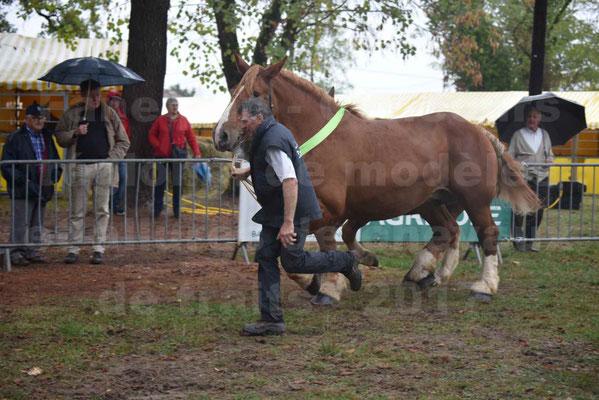Concours Régional de chevaux de traits en 2017 - Trait BRETON - Jument suitée - ROYALE DE MARS - 08