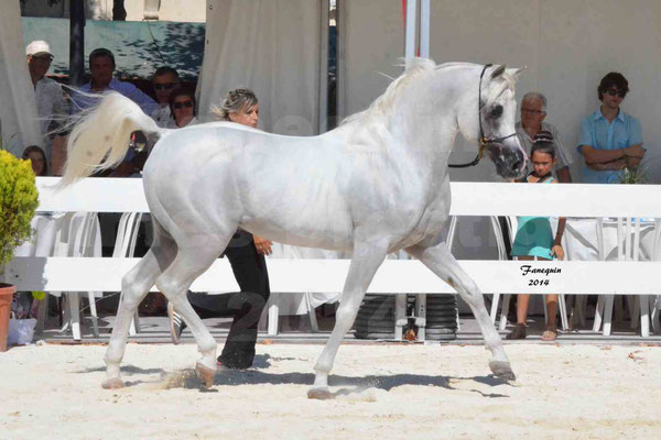 Concours national de Nîmes 2014 - ESTA ESPLANAN - Notre Sélection - 10