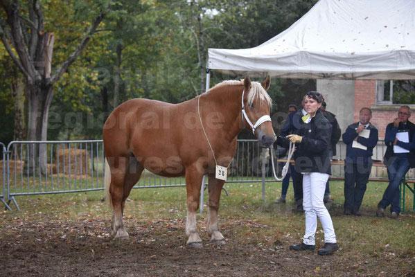 Concours Régional de chevaux de traits en 2017 - Trait COMTOIS - ETOILE 90 - 48