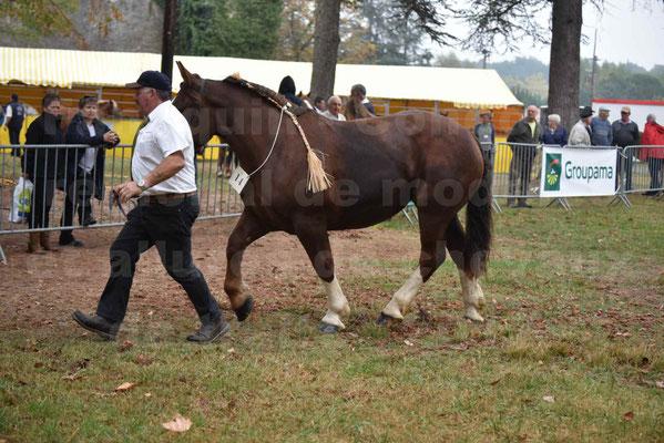 Concours Régional de chevaux de traits en 2017 - Trait BRETON - FRIVOLE DU JAUDY - 25