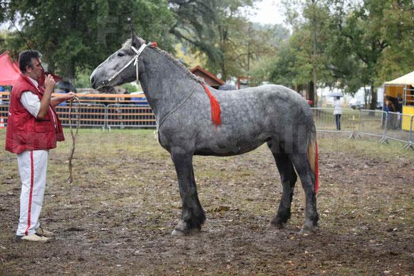 Concours Régional de chevaux de traits en 2017 - Pouliche Trait PERCHERON - FANY DES COUSTAUSSES - 2