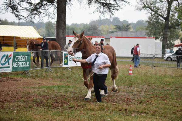 Concours Régional de chevaux de traits en 2017 - Trait BRETON - FEE DE MARLAC - 01