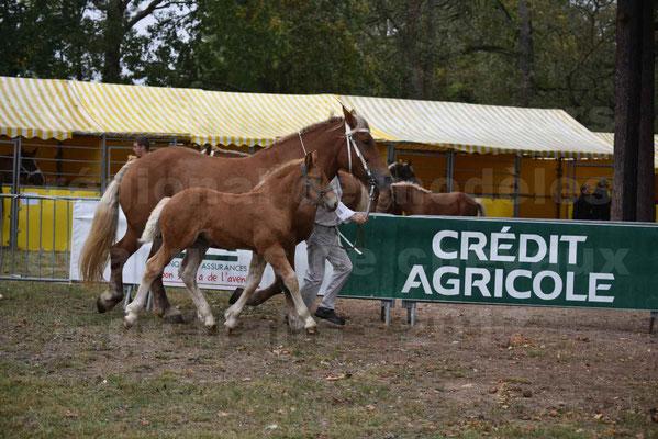 Concours Régional de chevaux de traits en 2017 - Jument & Poulain COMTOIS - ALLIANCE 3 - 25