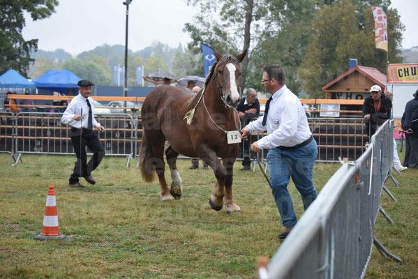 Concours Régional de chevaux de traits en 2017 - Trait BRETON - FINNE DE SAND - 10