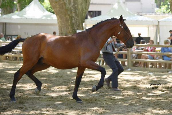 Championnat de France de chevaux LUSITANIENS à Beaucaire - 2