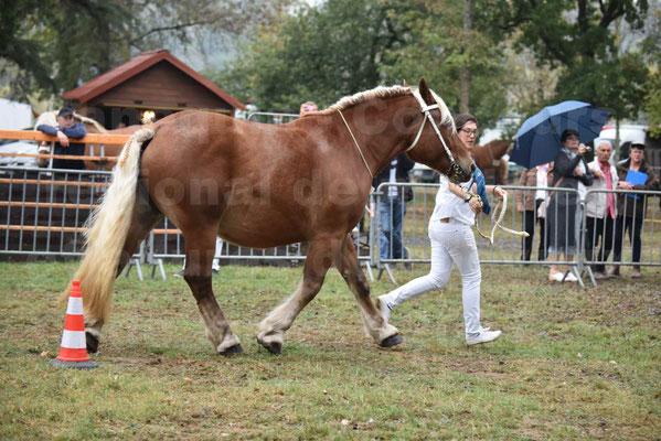 Concours Régional de chevaux de traits en 2017 - Jument & Poulain Trait COMTOIS - DAKOTA DU GARRIC - 11