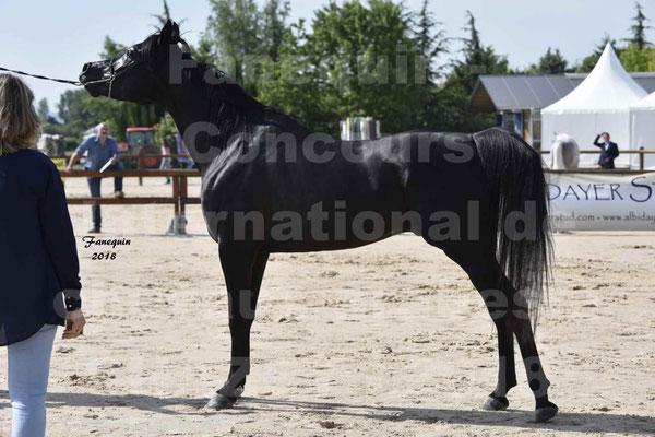 Concours Européens de chevaux ARABES à Chazey sur Ain les 11 & 12 Mai 2018 - BENJHY
