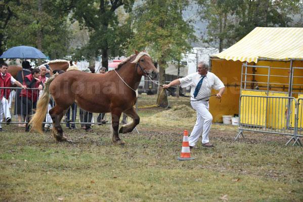 Concours Régional de chevaux de traits en 2017 - Pouliche Trait COMTOIS - DUCHESSE DE BENS - 12