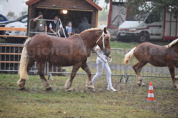 Concours Régional de chevaux de traits en 2017 - Trait COMTOIS - Jument suitée - ROXIE 7 - 10