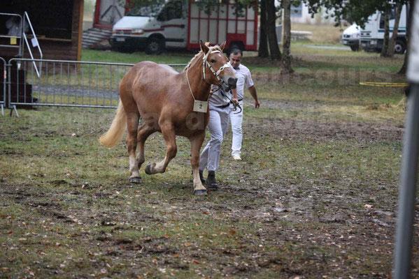 Concours Régional de chevaux de traits en 2017 - Trait COMTOIS - FLOIRIDE 2 - 2