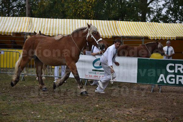 Concours Régional de chevaux de traits en 2017 - Jument & Poulain Trait COMTOIS - DIEZE DE GRILLOLES - 09