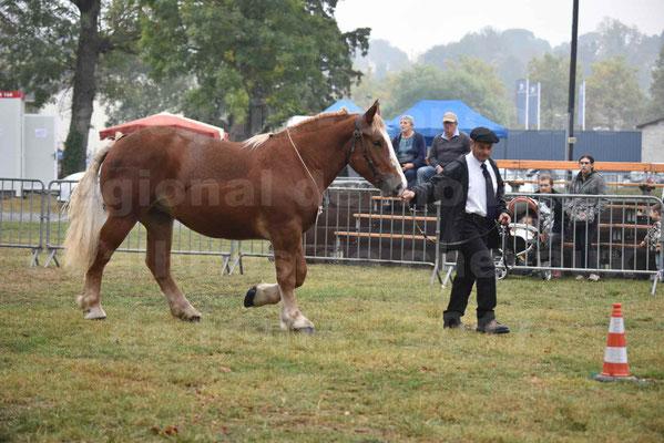 Concours Régional de chevaux de traits en 2017 - Trait BRETON - FLO DE LA MARGUE - 10