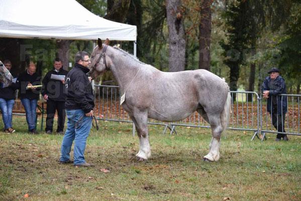 Concours Régional de chevaux de traits en 2017 - Jument & Poulain Trait BRETON - BELLE DOUS MOULIS - 01