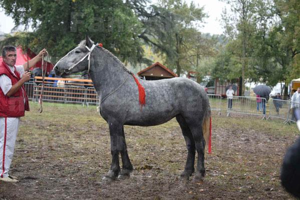 Concours Régional de chevaux de traits en 2017 - Pouliche Trait PERCHERON - FANY DES COUSTAUSSES - 6