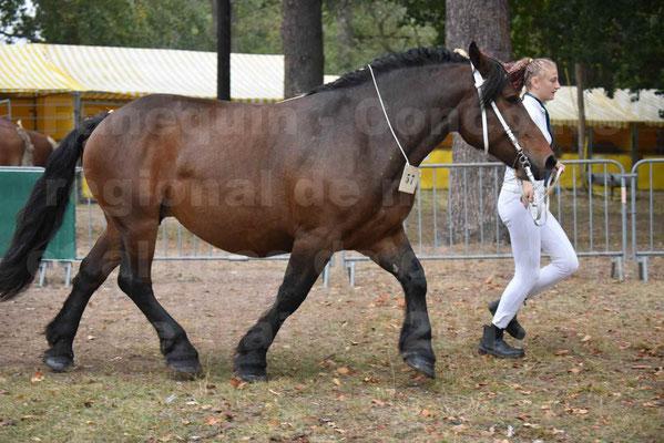 Concours Régional de chevaux de traits en 2017 - Jument & Poulain Trait COMTOIS - CANDY DE GRILLOLES - 24