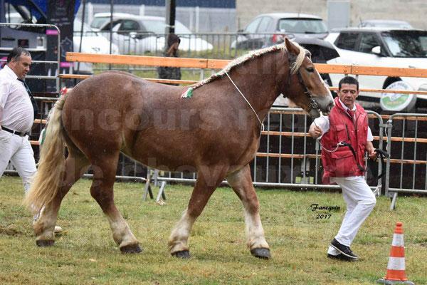 Concours Régional de chevaux de traits en 2017 - Trait ARDENNAIS - FLEUR D'ARIES - 04
