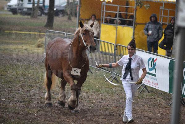 Concours Régional de chevaux de traits en 2017 - Trait COMTOIS - Jument suitée - ROXIE 7 - 13