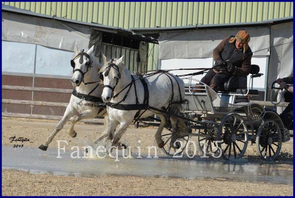 Cheval Passion 2015 - Démonstration d'attelage en paire de chevaux CAMARGUE