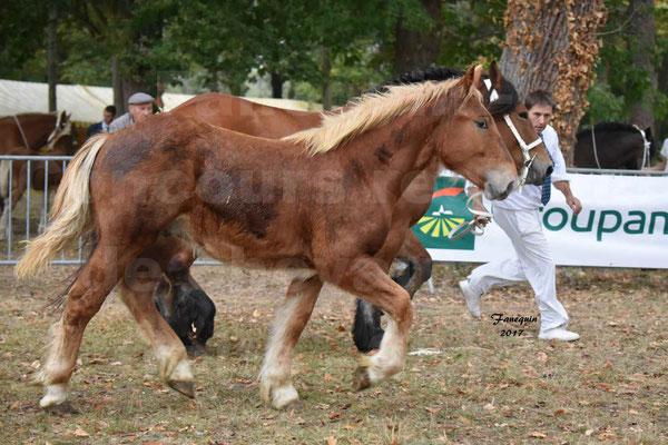 Concours Régional de chevaux de traits en 2017 - Jument & Poulain Trait COMTOIS - COMETE DE GRILLOLES - 03
