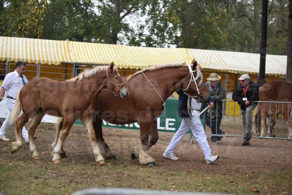 Concours Régional de chevaux de traits en 2017 - Jument Suitée - Trait COMTOIS - TOSCANE DE GIOUX - 04