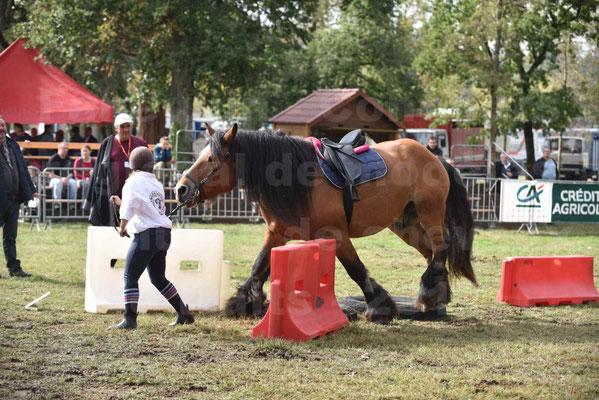 Concours régional de chevaux de traits 2017 - QUIQUINOU - 05
