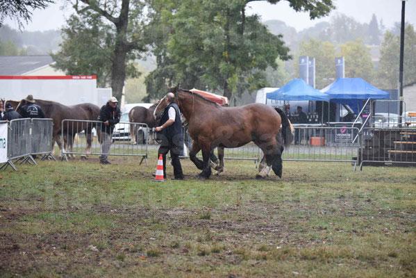Concours Régional de chevaux de traits en 2017 - Jument Suitée - Trait BRETON - UNION 11 - 08