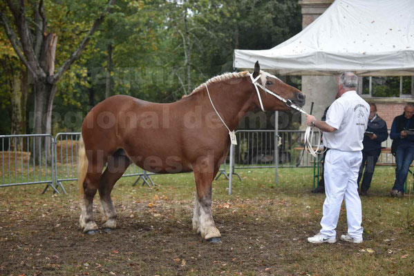 Concours Régional de chevaux de traits en 2017 - Trait COMTOIS - ETOILE DES NAUZETTES - 03