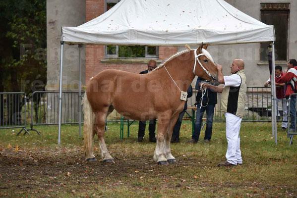 Concours Régional de chevaux de traits en 2017 - Trait COMTOIS - ELLA DE BELLER - 2