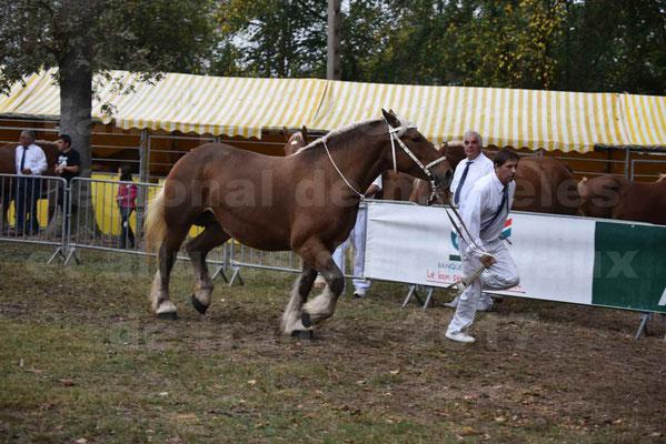 Concours Régional de chevaux de traits en 2017 - Jument & Poulain Trait COMTOIS - BESMA DE GRILLOLES - 24