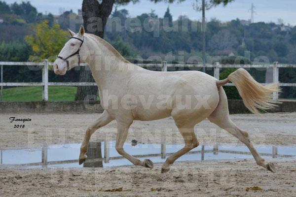 Confirmation de chevaux LUSITANIENS aux Haras d'UZES - LOLIBLEU