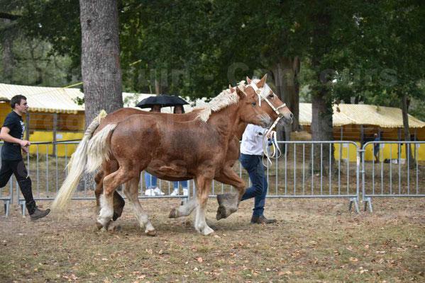 Concours Régional de chevaux de traits en 2017 - Trait COMTOIS - Jument suitée - ROXANE D'USSON - 23