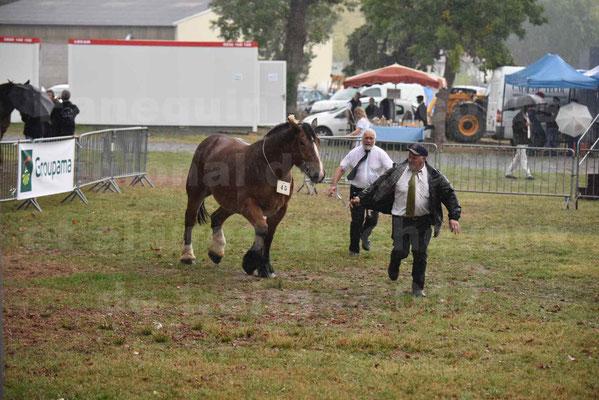 Concours Régional de chevaux de traits en 2017 - Trait BRETON  - EGLANTINE DE BENECHE - 16