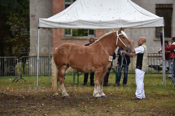 Concours Régional de chevaux de traits en 2017 - Trait COMTOIS - ELLA DE BELLER - 1