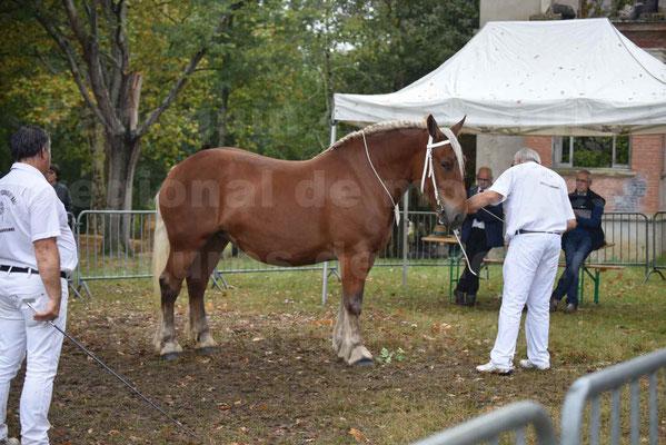 Concours Régional de chevaux de traits en 2017 - Trait COMTOIS - ELLIA DE FENEYROLS - 12