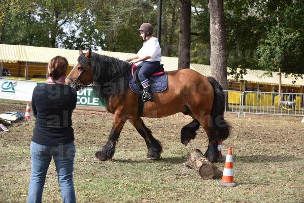 Concours régional de chevaux de traits 2017 - QUIQUINOU - 23