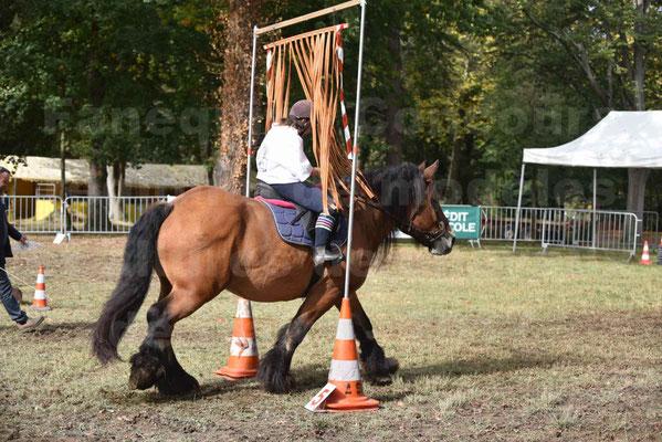 Concours régional de chevaux de traits 2017 - QUIQUINOU - 07
