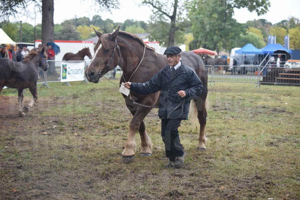 Concours Régional de chevaux de traits en 2017 - Jument Suitée - Trait BRETON - URIELLE DE LA MARGUE - 26