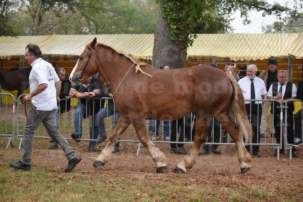 Concours Régional de chevaux de traits en 2017 - Trait BRETON - FLICKA 26 - 26